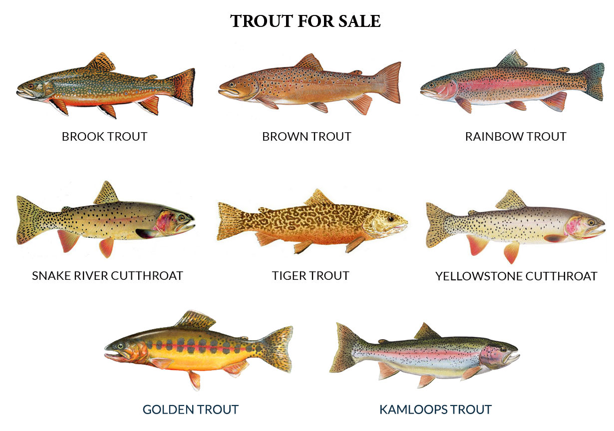 Trout production feed service for private ponds for Small pond fish types
